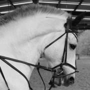 Cesión de caballos Haras de Compostela